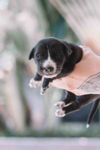 What is the best thing to give a teething puppy?