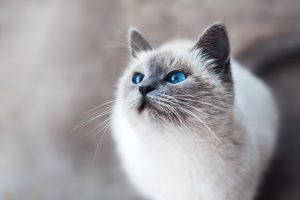 Can cats sense sleep apnea?